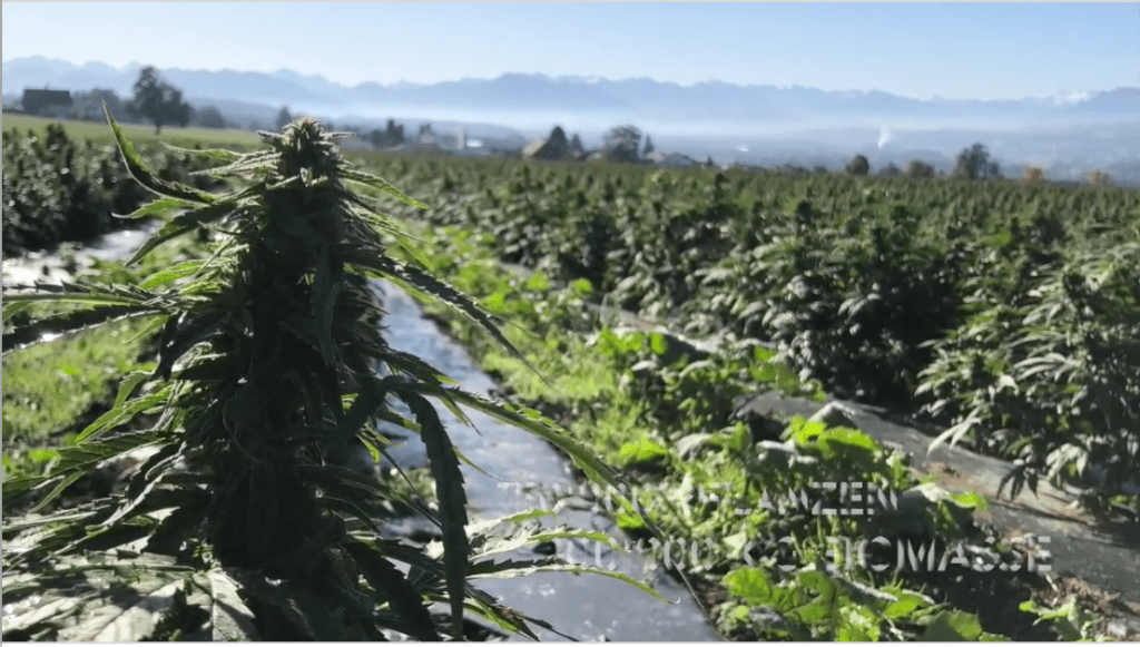Harvesting 2019